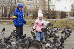 Children feed pigeons in the park. Royalty Free Stock Image