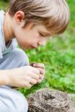 Children feed wild Chicks in nest. Children feed wild Chicks in the nest fallen to the ground stock image