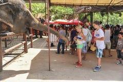 Children feeding an elephant Stock Images