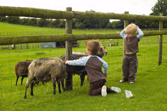 Children feeding goats. Royalty Free Stock Images
