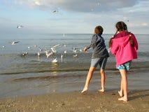 Children Feeding Gulls. On the beach stock photo