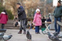 Children feeding pigeons royalty free stock image