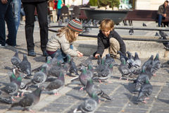 Children feeding pigeons Stock Photos