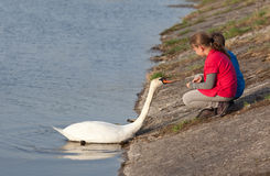 Children feeding swan Stock Photography