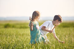 Children in the field at sunny summer morning Stock Images