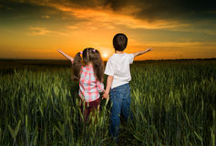Children in a field at sunset Stock Image