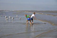 Children fishing shrimps and crabs, Oostduinkerke,. The UNESCO has added the shrimp fishermen on horseback of Oostduinkerke to the world list of intangible Stock Photo