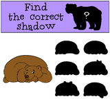 Children games: Find the correct shadow. Cute brown bear. Children games: Find the correct shadow. Cute brown bear smiles Royalty Free Stock Photography