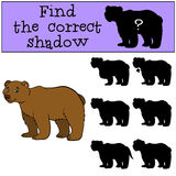 Children games: Find the correct shadow. Cute brown bear. Stock Images