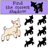 Children games: Find the correct shadow. Cute little baby goat. Children games: Find the correct shadow. Cute little baby goat jumps and smiles Royalty Free Stock Image