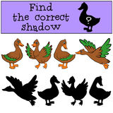 Children games: Find the correct shadow. Ducks. Children games: Find the correct shadow. Four ducks Royalty Free Stock Photo