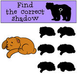 Children games: Find the correct shadow. Little cute baby bear sleeps Royalty Free Stock Photo