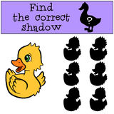 Children games: Find the correct shadow. Little cute duckling. Children games: Find the correct shadow. Little cute duckling smiles Royalty Free Stock Photo