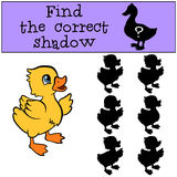 Children games: Find the correct shadow. Little cute duckling. Children games: Find the correct shadow. Little cute duckling smiles Royalty Free Stock Image
