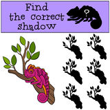 Children games: Find the correct shadow. Little cute pink chameleon sits on the tree branch and smiles Stock Photography