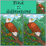 Children games: Find differences. Cute bald eagle sits on the tree branch. Children games: Find differences. Cute bald eagle sits on the tree branch and smiles Stock Image