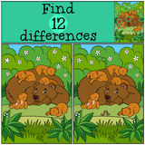 Children games: Find differences. Daddy bear. With his sleeping little cute baby bears in the forest Royalty Free Stock Photos