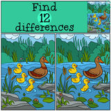 Children games: Find differences. Duck and ducklings. Children games: Find differences. Duck and ducklings on the lake Royalty Free Stock Photo