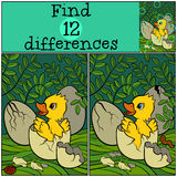 Children games: Find differences.  Little cute duckling. Royalty Free Stock Images