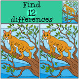 Children games: Find differences. Little cute lynx. Stock Image