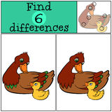 Children games: Find differences. Mother duck with cute duckling. Children games: Find differences. Mother duck with little cute duckling Stock Photography