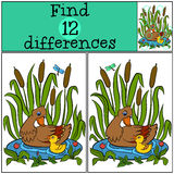 Children games: Find differences. Mother duck swims on the pond with her little cute duckling. Royalty Free Stock Image