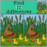 Children games: Find differences. Mother duck walks with her little cute ducklings. Children games: Find differences. Mother duck walks with her little cute Royalty Free Stock Images