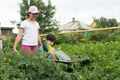 Children in the garden wheelbarrow outdoors.Harvest vegetables. Children in the garden wheelbarrow with a crop of vegetables in the open air.The girl is Royalty Free Stock Photography