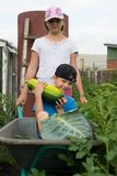 Children in the garden wheelbarrow outdoors.Harvest vegetables. Children in the garden wheelbarrow with a crop of vegetables in the open air.The girl is Stock Images
