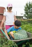 Children in the garden wheelbarrow outdoors.Harvest vegetables. Children in the garden wheelbarrow with a crop of vegetables in the open air.The girl is Stock Photos