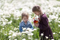 Children gather fresh flowers in the meadow on a sunny summer day. Kids choose flowers for mom. Two cute sisters playing in a field of spring flowers. Children royalty free stock photography