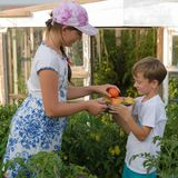 Children gather vegetables harvest. A boy and a girl are working. Children harvest vegetables in a family garden.A boy and a girl in the garden are harvesting a stock photo