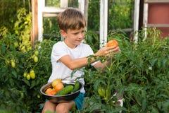 Children gather vegetables harvest. Children harvest vegetables in a family garden Royalty Free Stock Images