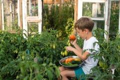 Children gather vegetables harvest. Children harvest vegetables in a family garden Stock Photo