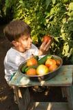 Children gather vegetables harvest. Children harvest vegetables in a family garden Stock Photos
