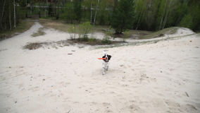 Young Springer Spaniel plays with disk frisbee on spring field stock video
