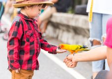 A Children give a food for a bird in the park stock photography