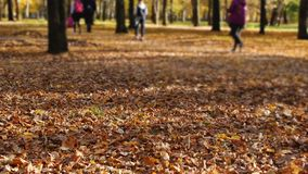 Children go to school through the autumn park. Leaf fall in a town in sunny day. Beautiful nature. Kids go to school through the autumn park. Leaf fall in a town stock video