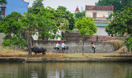 Children going home by bikes on rural road in Phu Tho, Vietnam Royalty Free Stock Photo