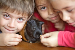 Children and guinea pig royalty free stock images
