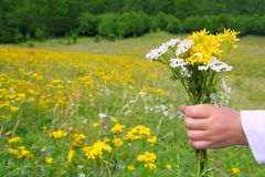 Children hand hold flowers in spring meadow Royalty Free Stock Image