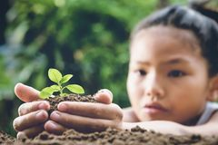 children hand holding small tree for planting in garden. concept royalty free stock photos