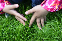 Children hand on young grass. Stock Photos
