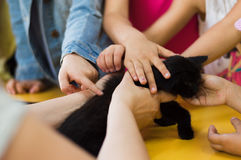 Children hands holding a black kitty on a table in a classroom. Stock Images