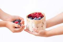 Children hands, holding raspberries and blueberries, basket with stock photo
