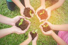 Children hands holding sapling in soil surface with plant royalty free stock images