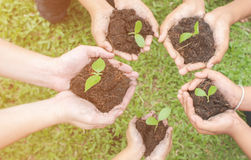 Children hands holding sapling in soil surface with plant royalty free stock photo