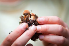 Children hands holding small mushrooms Stock Photo