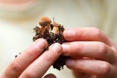 Children hands holding small mushrooms stock image