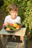 Children gather vegetables harvest. The boy works in a greenhouse with vegetables.. Children harvest vegetables in a family garden. A boy in a greenhouse stock photos